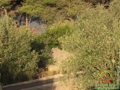 gradevinsko-zemljiste-pov-1343-m2-mjesto-kali-mala-lamjana-na-otoku-ugljanu-3.jpeg thumbnail
